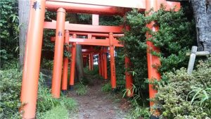 夏越大祓 茅の輪をくぐり 烏子稲荷神社