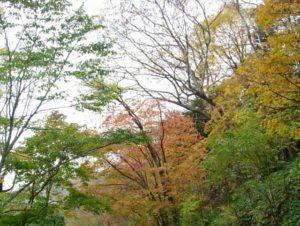 丸沼・菅沼の紅葉
