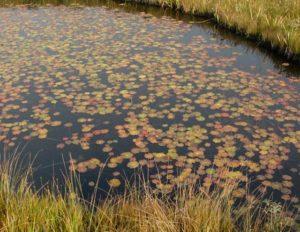 尾瀬 紅葉 池塘