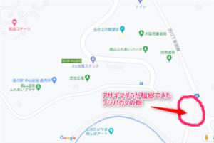 道の駅中山盆地 フジバカマ