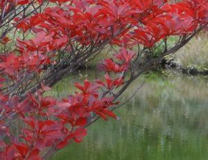 草津温泉 紅葉