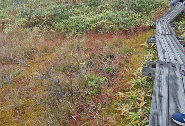 草津温泉 紅葉 武具脱の池