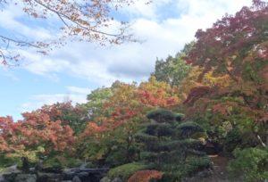 桜山公園の 紅葉