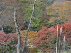 桜山公園 紅葉