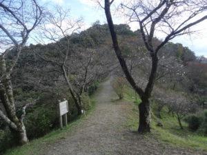 桜山公園 紅葉 冬桜