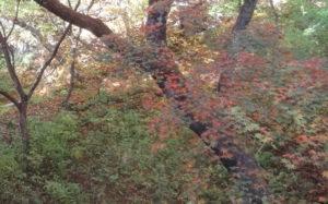 伊香保温泉 紅葉