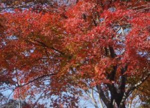 紅葉山の紅葉
