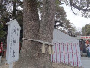 玉村八幡宮 初詣