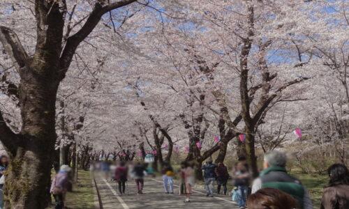 赤城南面千本桜まつり